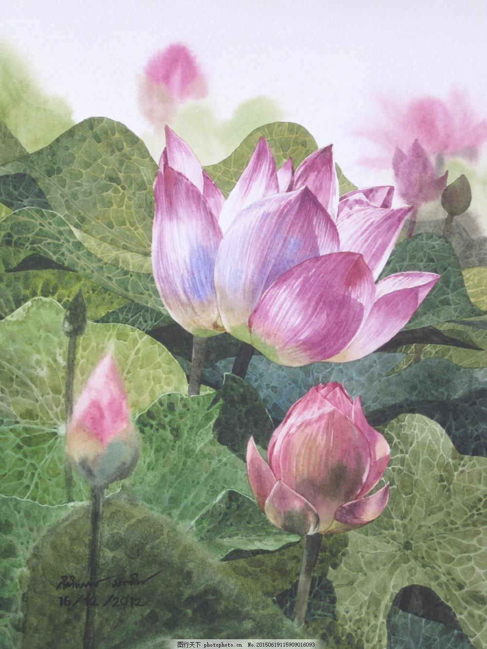 莲花荷花水彩 手绘 绘画 水彩画 水粉 白色