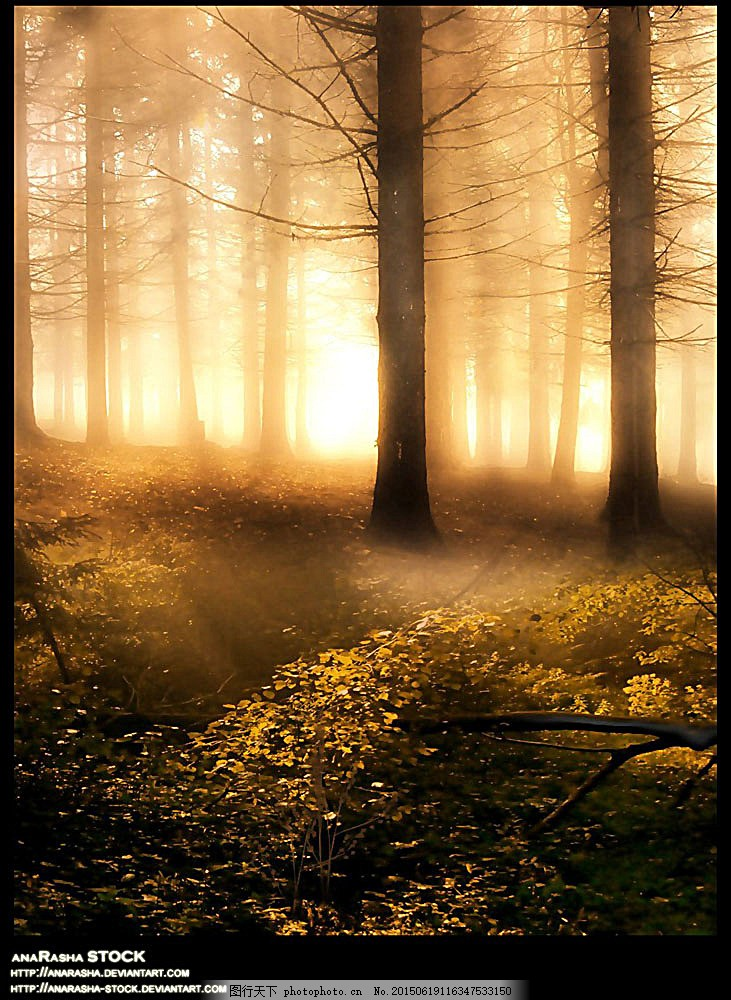 梦幻花草树木高清摄影 森林 梦幻森林 光 梦幻背景 清晨 早晨