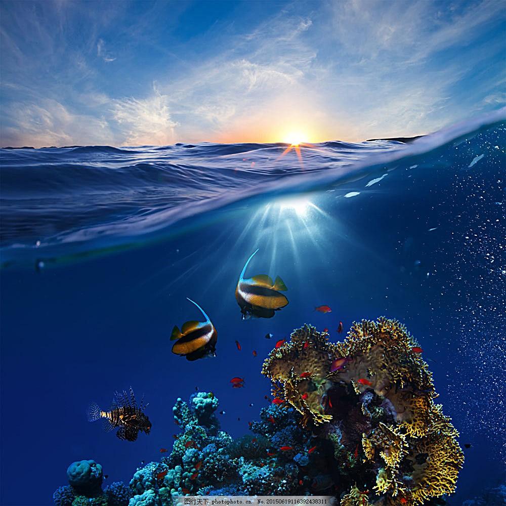 蓝色天空大海摄影 鱼 珊瑚 动物 海洋 景区 海洋世界 海洋海边