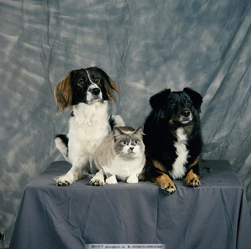 桌子上的猫和狗图片