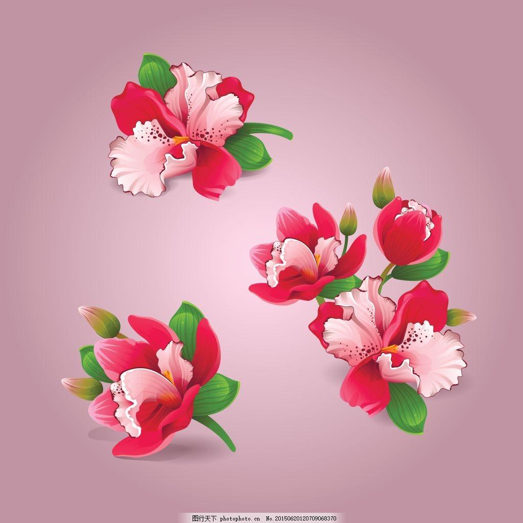 美丽的花朵 植物 手绘 粉色