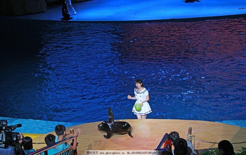 乐和乐都 海豚 海豚表演 海豚翻身 动物表演 杂技表演 海豚杂志 海豚