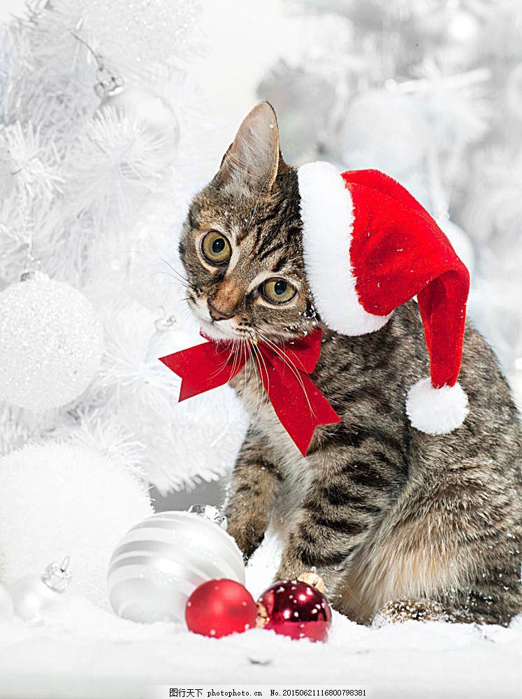 圣诞动物 圣诞猫 戴着圣诞帽子的猫 圣诞节 彩球 吊球 雪花 圣诞素材
