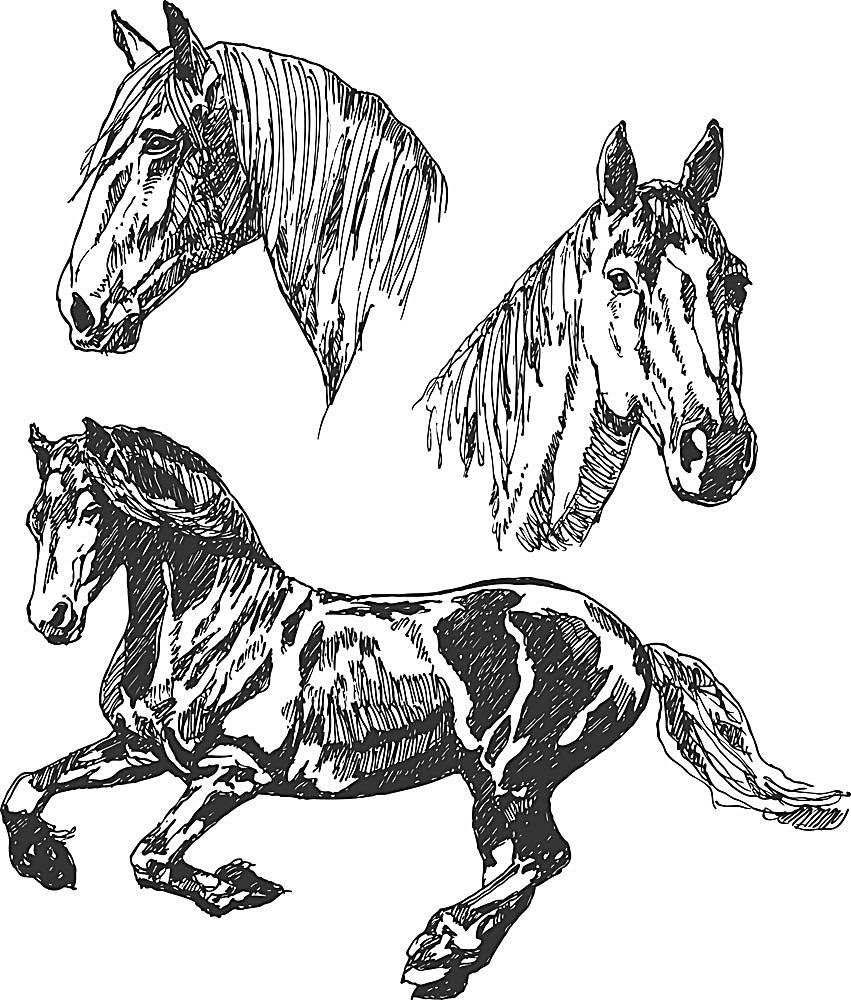 手绘马 飞奔 马年 骏马 图标 马匹 骏马图标 陆地动物 生物世界