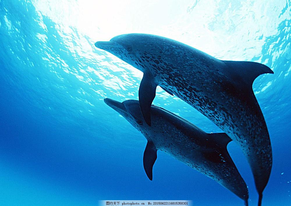 海底中的海豚 动物世界 大海 海底生物 鱼类 海豚 水中生物 生物世界