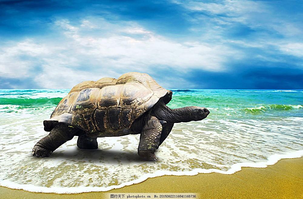 海边沙滩海龟 动物 两栖动物 陆地动物 生物世界 水中生物 图片素材