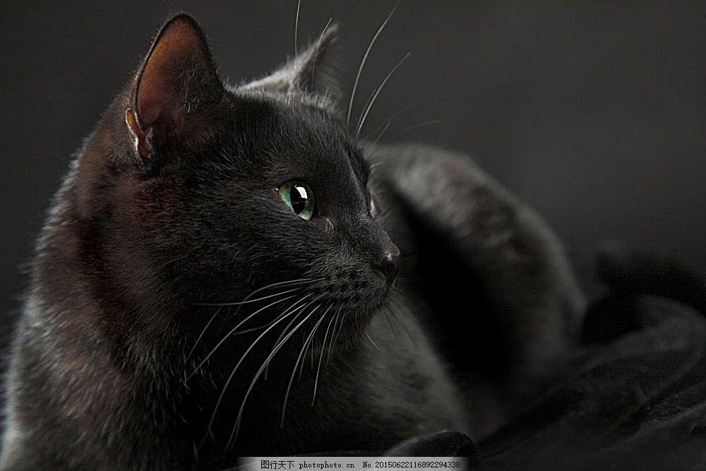 黑色猫咪摄影