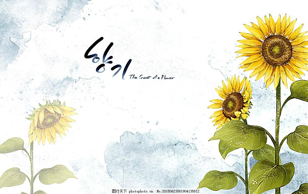 向日葵花朵插画图片