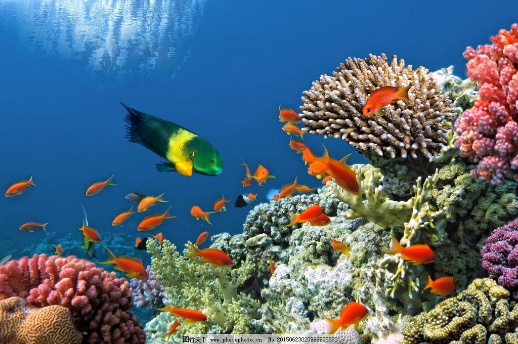 海底世界_背景图片_底纹边框