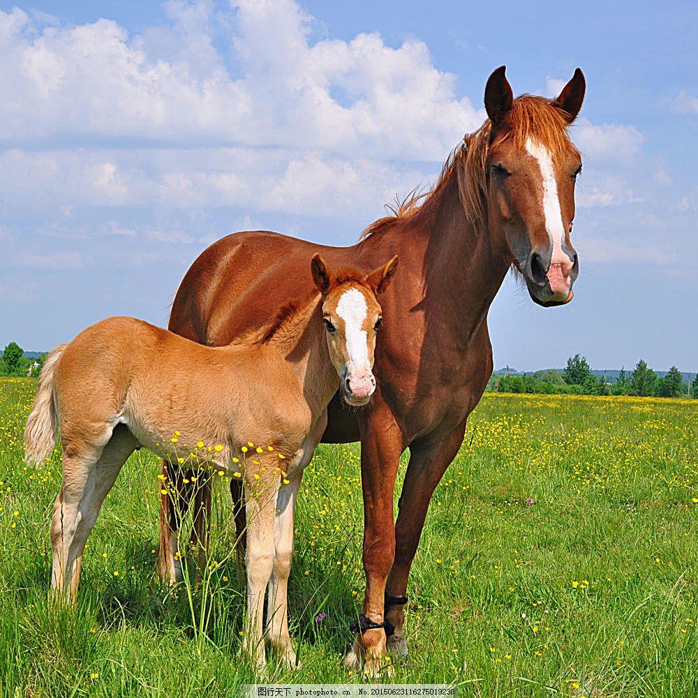 草地上的马 草地上的骏马 马区 小马 牧场 家畜动物 动物摄影