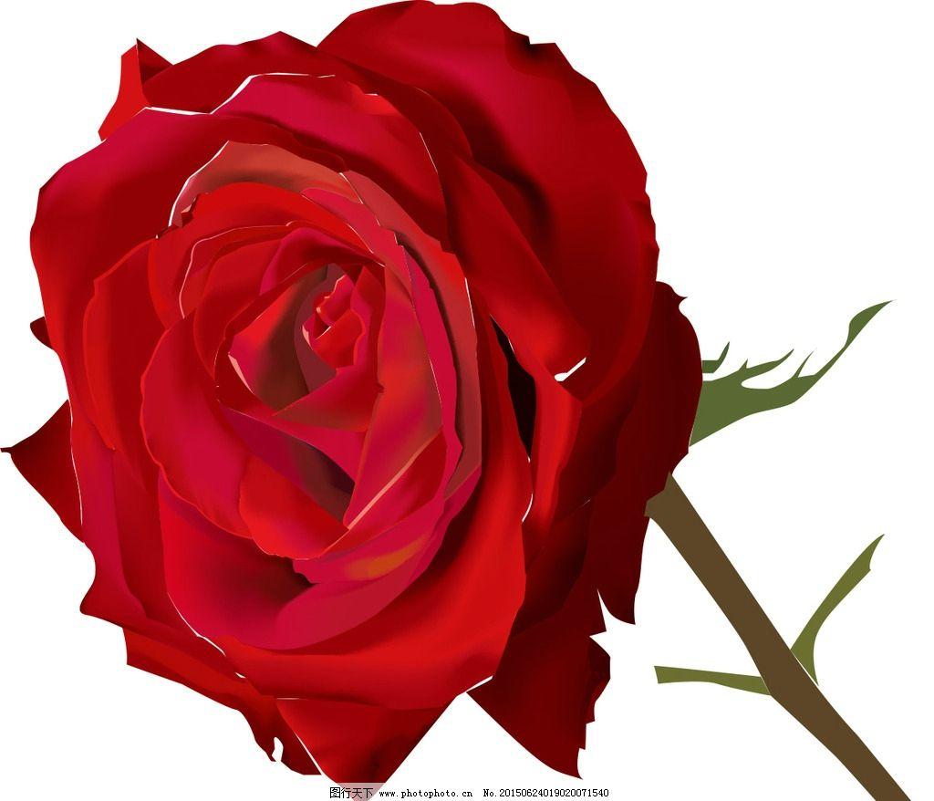 玫瑰花 玫瑰 花卉 壁画 设计 墙纸花卉素材专辑 设计 文化艺术 绘画