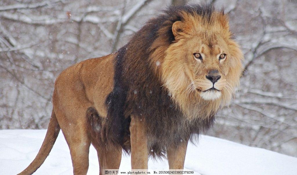 狮子王里的动物名称和图片