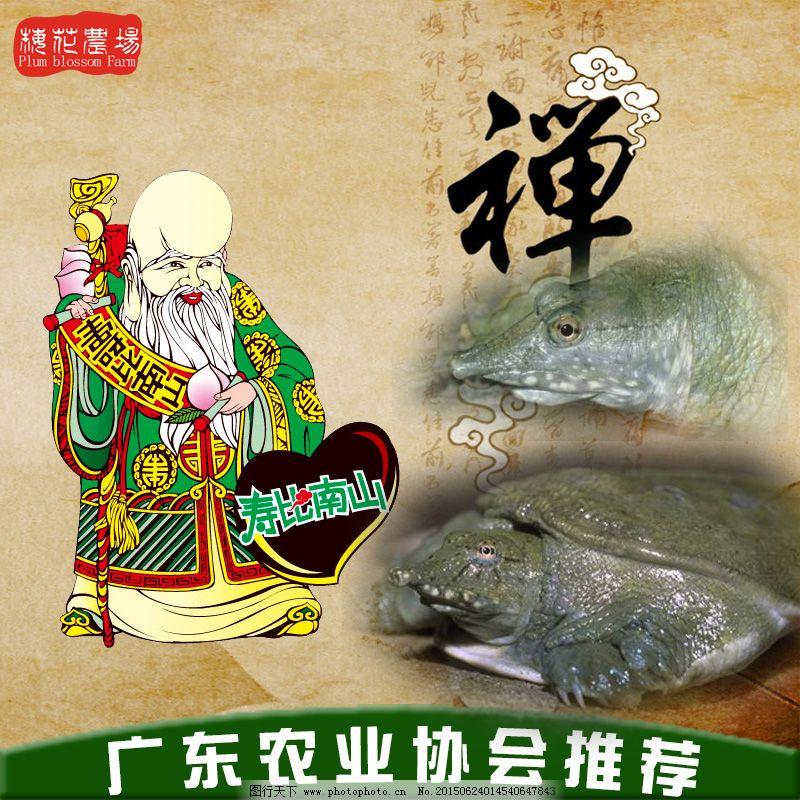 甲鱼主图 甲鱼主图免费下载 中国风 食物主图 养生主图 农产品主图