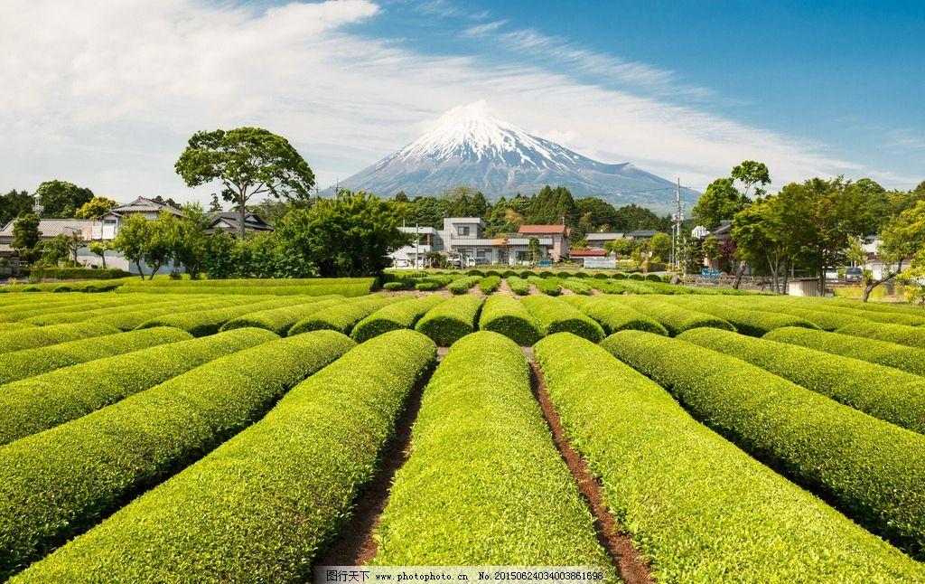 唯美 风景 风光 旅行 自然 日本 东京 农田 蓝天 白云 富士山 摄影