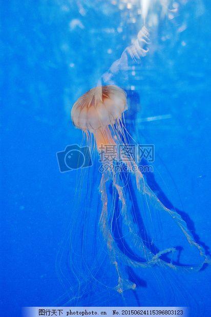 大海里的水母