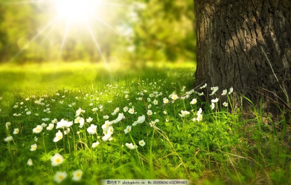 阳光明媚的草地 风景 绿色 背景 黄色