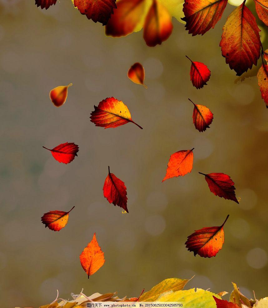 落叶 飘飘 纷飞 秋天 秋叶图片