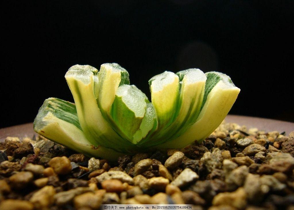 多肉盆景 多肉植物 植物 静物 小清新  摄影 生物世界 花草 72dpi jpg