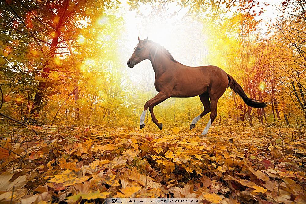 秋天树林里奔跑的骏马 动物世界 动物摄影 陆地动物 生物世界 图片