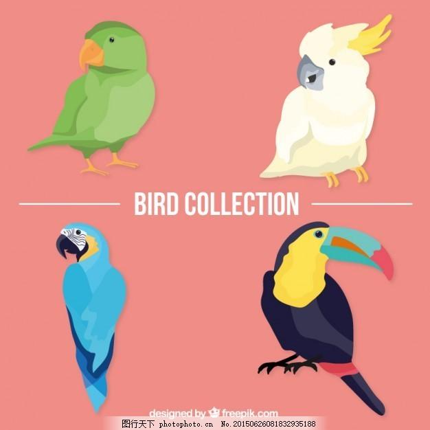 热带鸟包 手 自然 动物 手画 翅膀 羽毛 鸟类 丛林 颜色 动物园