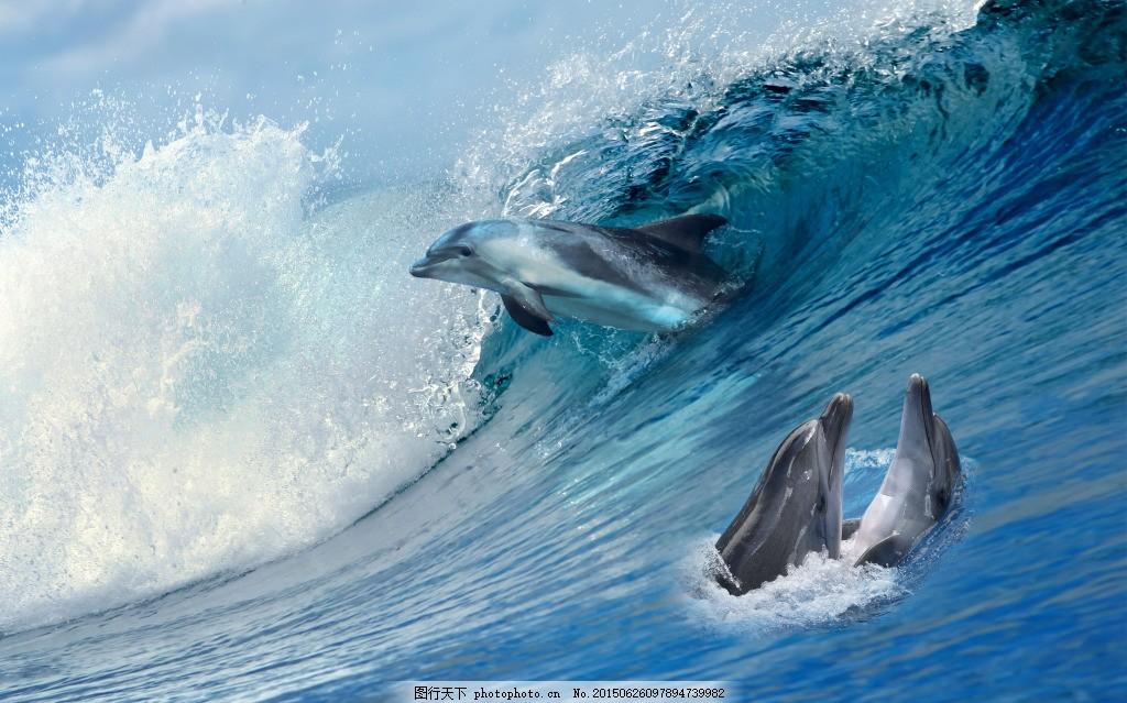 壁纸 动物 海洋动物 桌面 1024_639