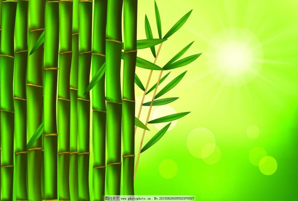 竹子 绿色 竹子