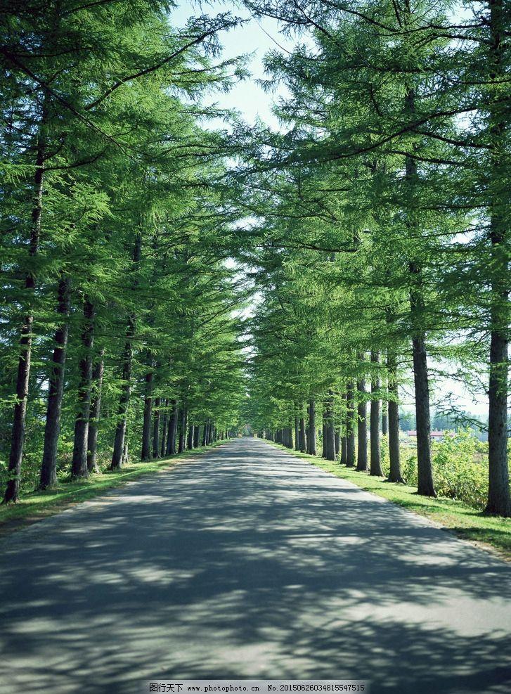 绿树图片,自然风景 草原 春天 夏天 公路 森林 摄