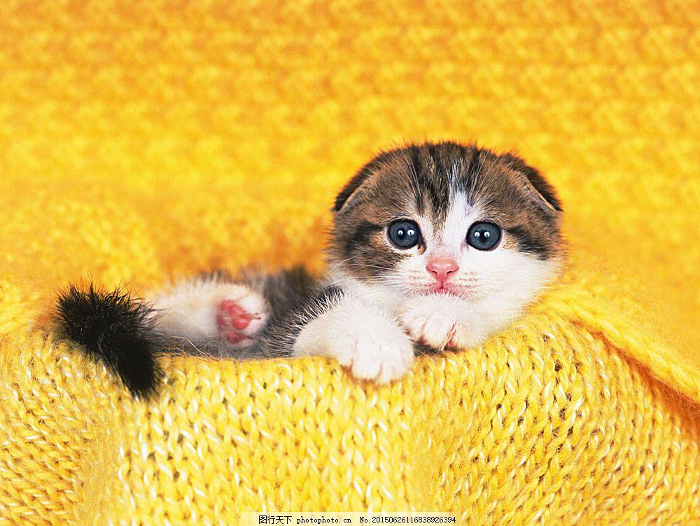 可爱猫咪 动物世界 小动物 宠物 小猫 陆地动物 生物世界 图片素材