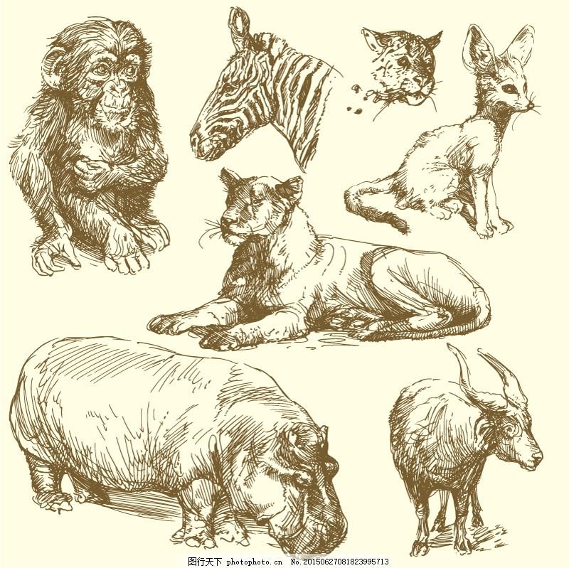 手绘野生动物 犀牛 狮子 白色