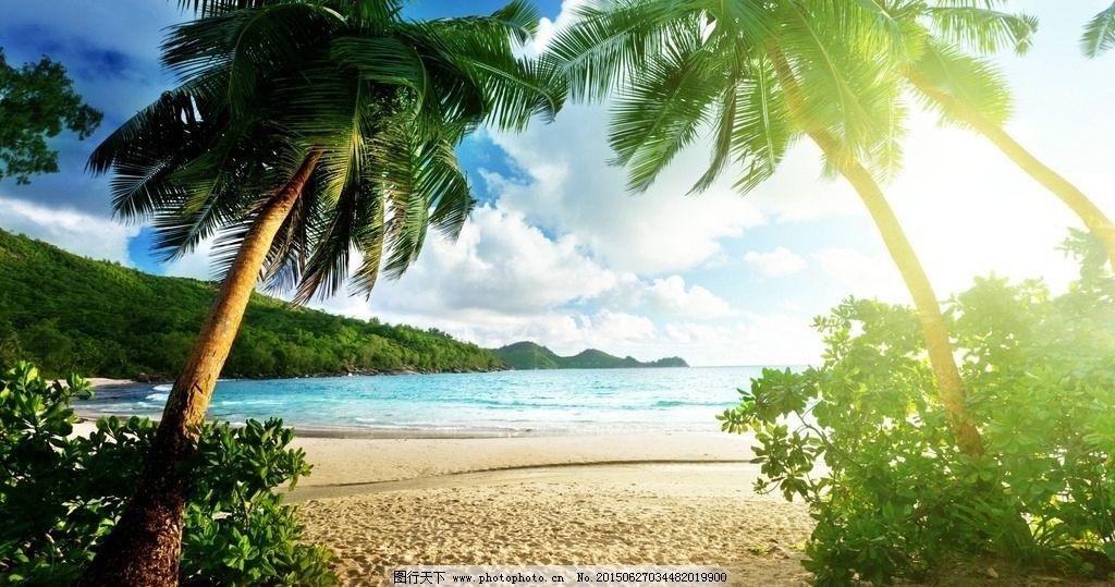 海边风景 沙滩背景 蓝天白云 绿色背景 网页背景 沙滩 椰子树 摄影