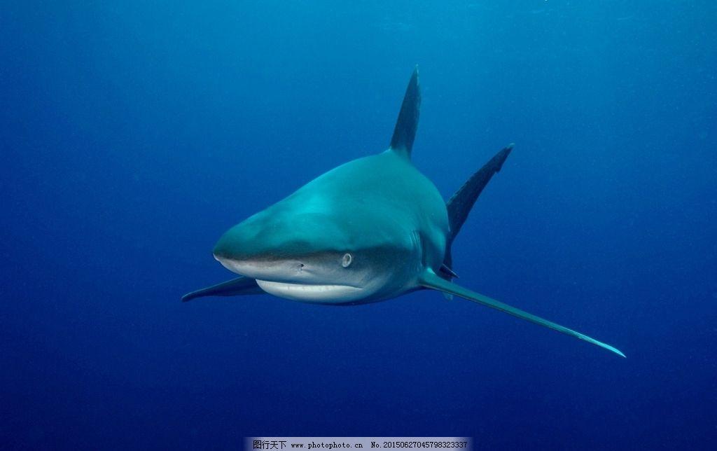 蓝色背景 海洋 深海 动物 闭嘴 海洋动物 深海动物 生物 深海中的鲨鱼