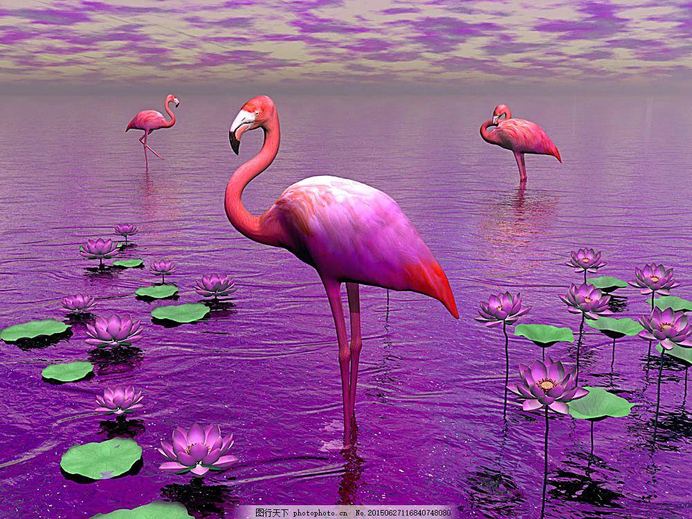 荷塘里的丹顶鹤 飞鸟 鸟类 生物世界 动物世界 野生动物 陆地动物