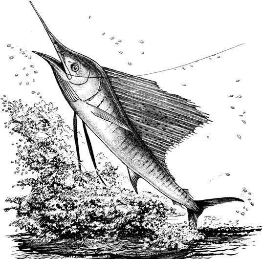 鱼 水中动物 动物素描 设计素材 动物专辑 素描速写 书画美术