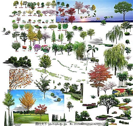 手绘树木平面图大图