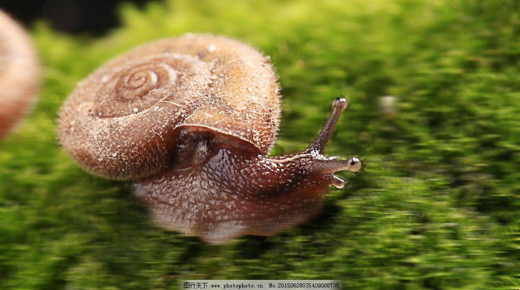 奔跑吧图片蜗牛表情最棒老公包仓鼠图片