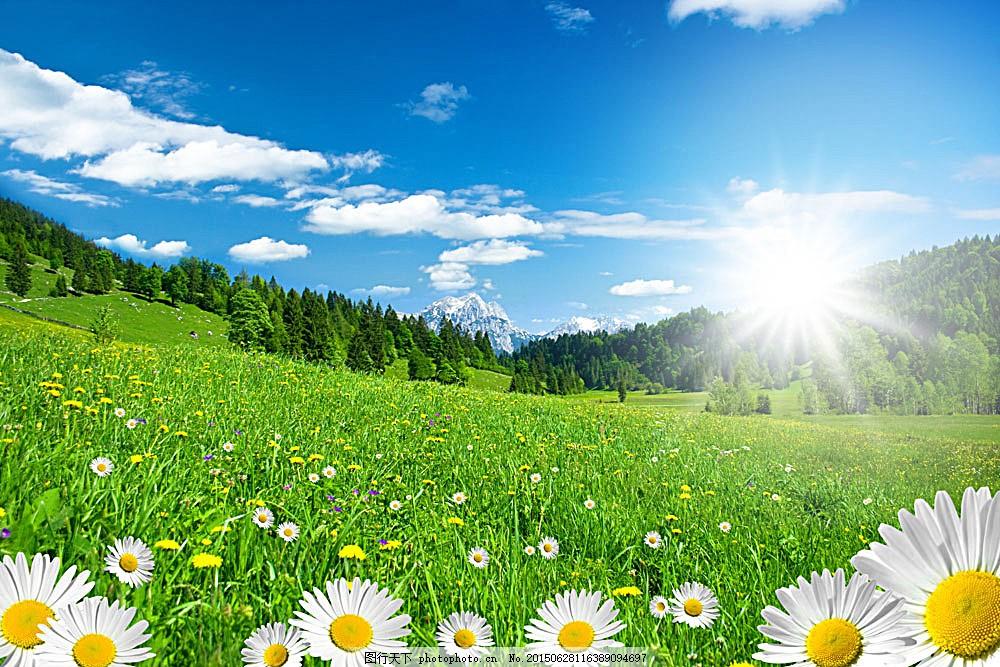 蓝天白云与鲜花草地 美丽鲜花 花朵 花卉 鲜花背景 底纹背景 菊花