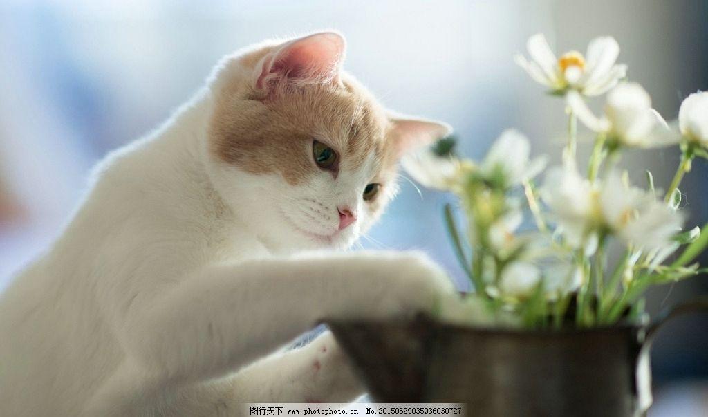 萌猫咪 可爱的小猫 萌萌哒喵咪 cute cat 小花猫攀枝花 摄影 生物世界