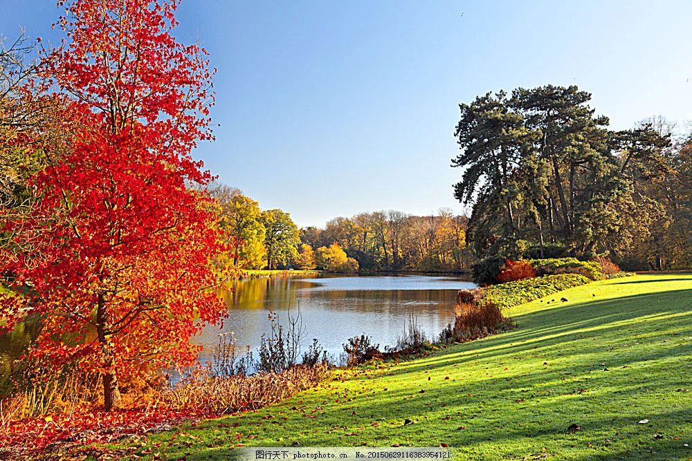 秋天树木草地风景