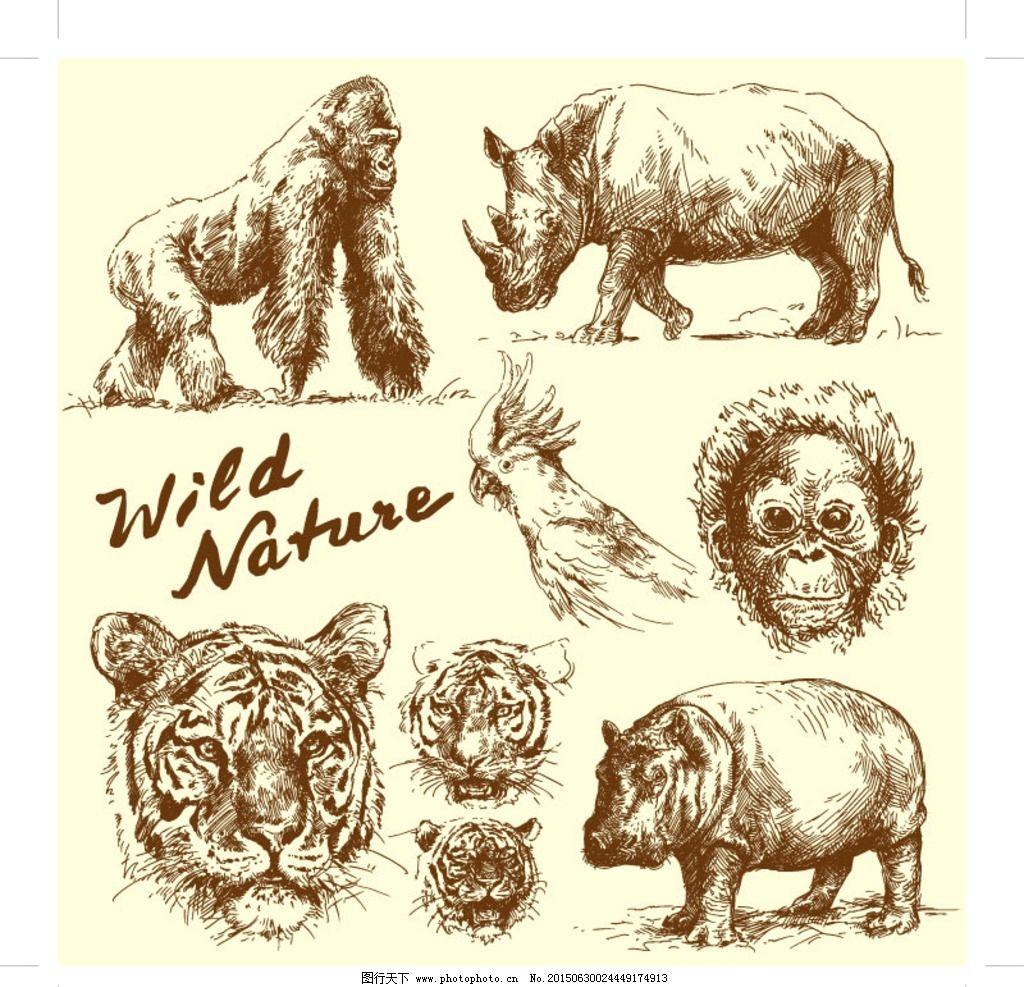 手绘野生动物图片