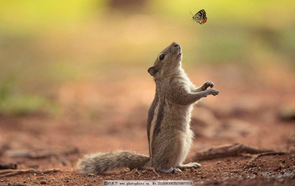 国外动物摄影图片