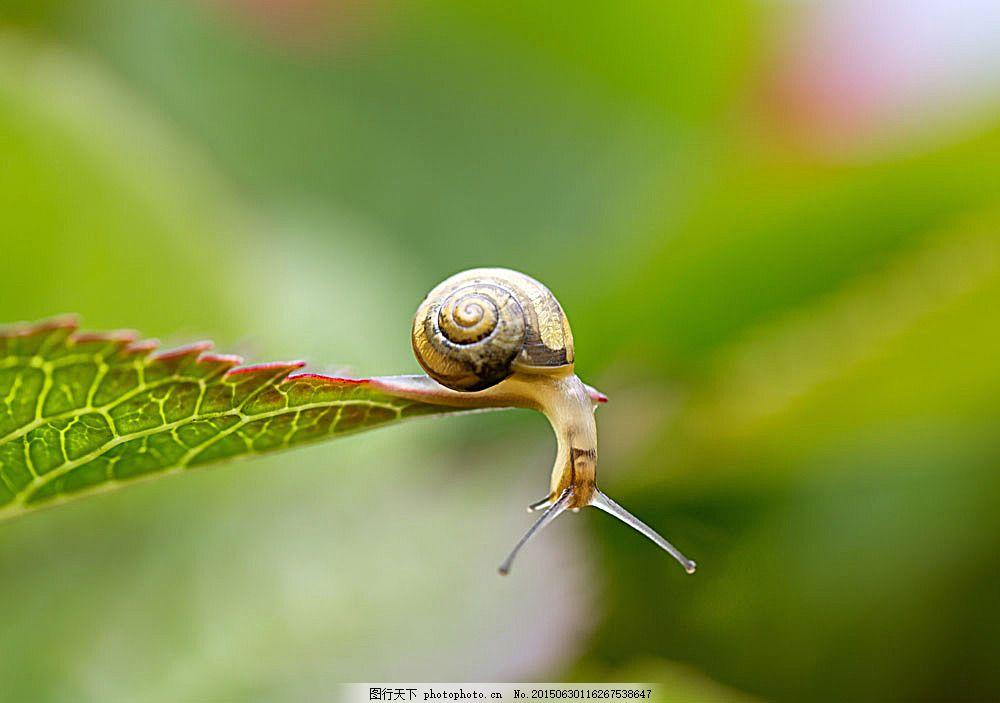 绿叶上的蜗牛 软体动物 植物 陆地动物 叶子 生物世界 图片素材