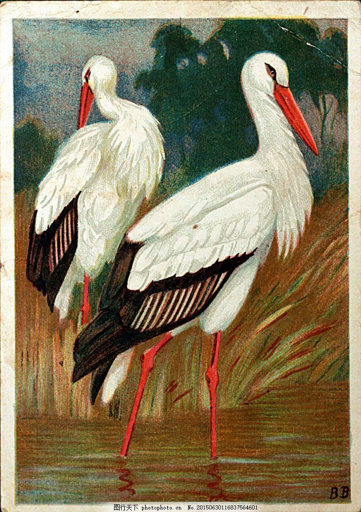 水彩仙鹤插画 水彩动物插画 油画 绘画艺术 水彩画 陆地动物 生物世界