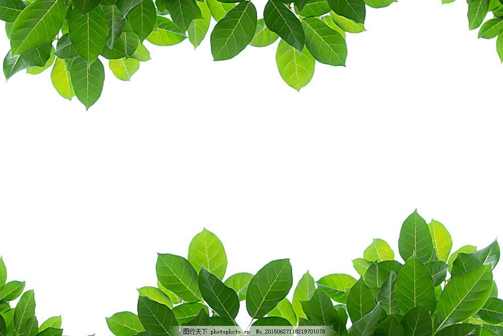 绿色叶子,春天树叶,绿叶,绿叶背景,春季,春天背景,其他生物